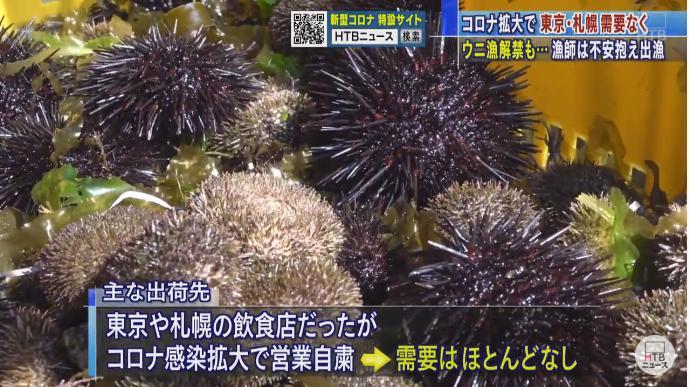 5/13 稚内ウニ漁解禁 6月下旬まで